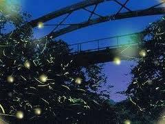 香月・黒川ほたる祭り2019の日程や見どころ、駐車場は?