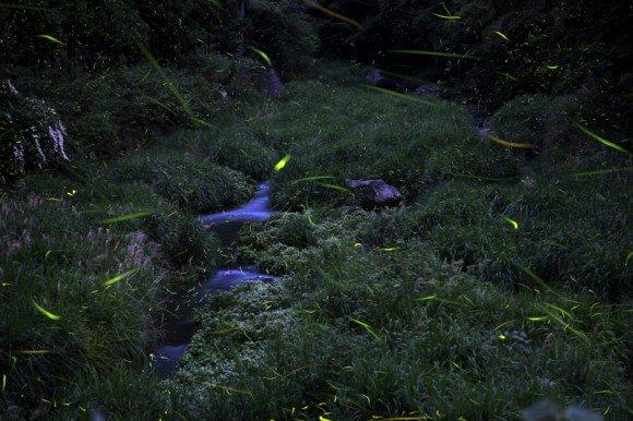【閉園】大阪舞洲ゆり園2018の開花状況や日程は?駐車場やアクセスは?