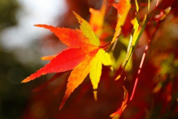上高地の紅葉2018の見ごろ時期と紅葉の絶景スポットは?
