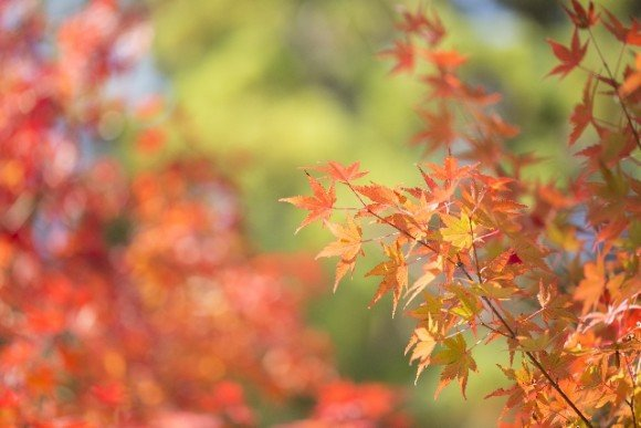 箱根の紅葉2018の見ごろ時期と穴場スポットはココ!