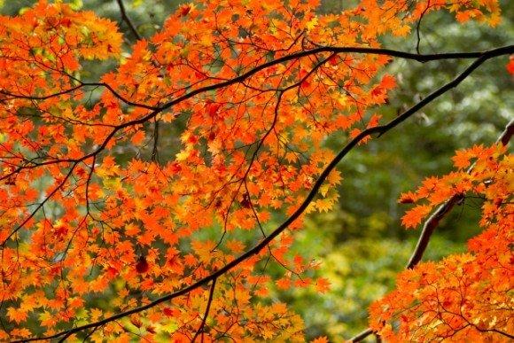 中禅寺湖の紅葉2018見ごろ時期とおススメの紅葉スポットはココ!
