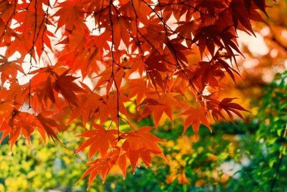 京都三千院の紅葉2018見ごろ時期とライトアップはいつ?