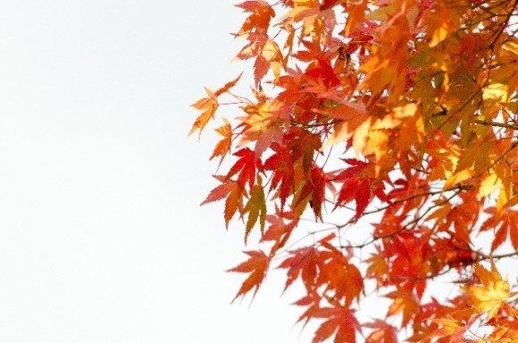 知恩院の紅葉2018のライトアップと見頃や紅葉スポットはココ!
