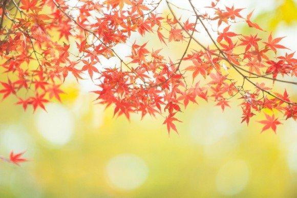 大阪の紅葉2019名所や穴場スポットと見ごろ時期やライトアップ