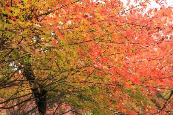 金閣寺の紅葉2018の見ごろ時期と穴場の紅葉スポットはココ!