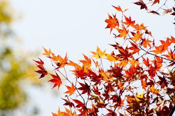 鎌倉の紅葉2018見頃と穴場の紅葉狩りスポットはココ!