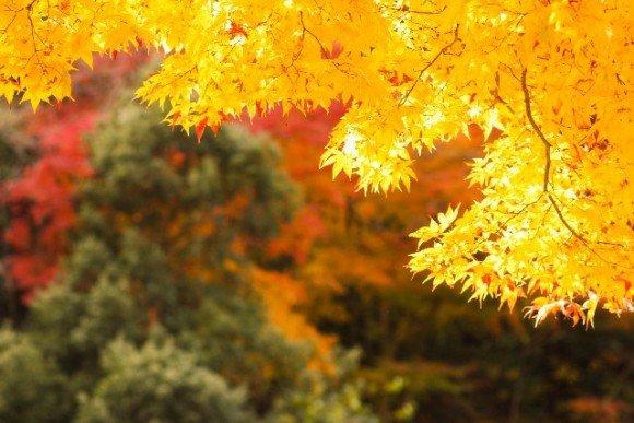 貴船神社の紅葉2018ライトアップや見頃時期と紅葉狩りスポットはココ!