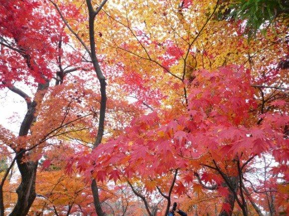 長瀞の紅葉2018のライトアップや見頃時期と紅葉狩りスポットはココ!