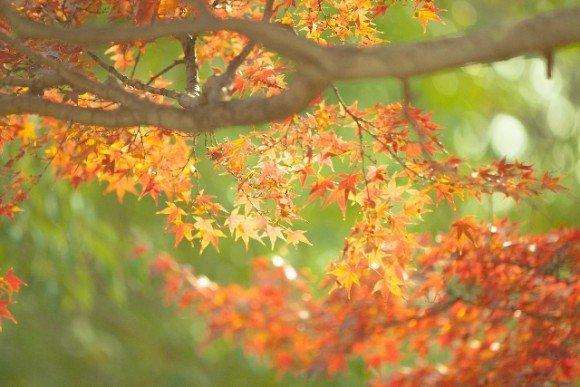 那須高原の紅葉2018の見ごろ時期と紅葉狩りスポットはココ!