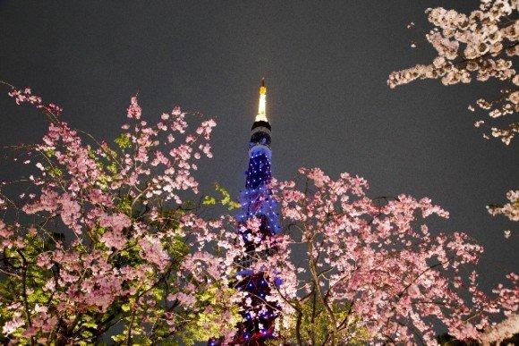 東京の桜・花見の名所や穴場おすすめ10選と開花情報2020!