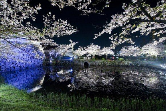 福岡の夜桜ライトアップの名所や穴場スポット10選!