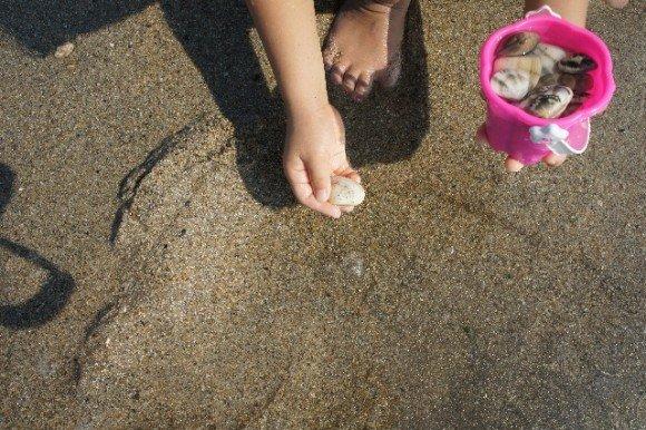 千葉の潮干狩りおすすめスポットや穴場と潮見表!