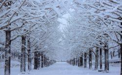 降り方や積もり方で変わる雪の種類と名前や表現が興味深い!